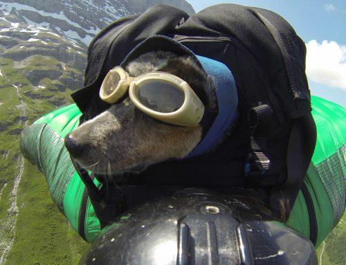 Dean Potter Talks 'When Dogs Fly'