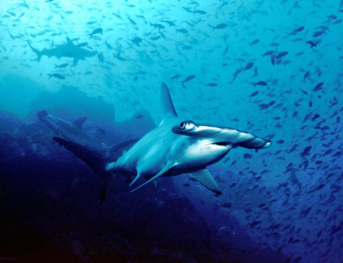 Black Friday 2019: 3 Shark Diving Deals You Need to Check Out